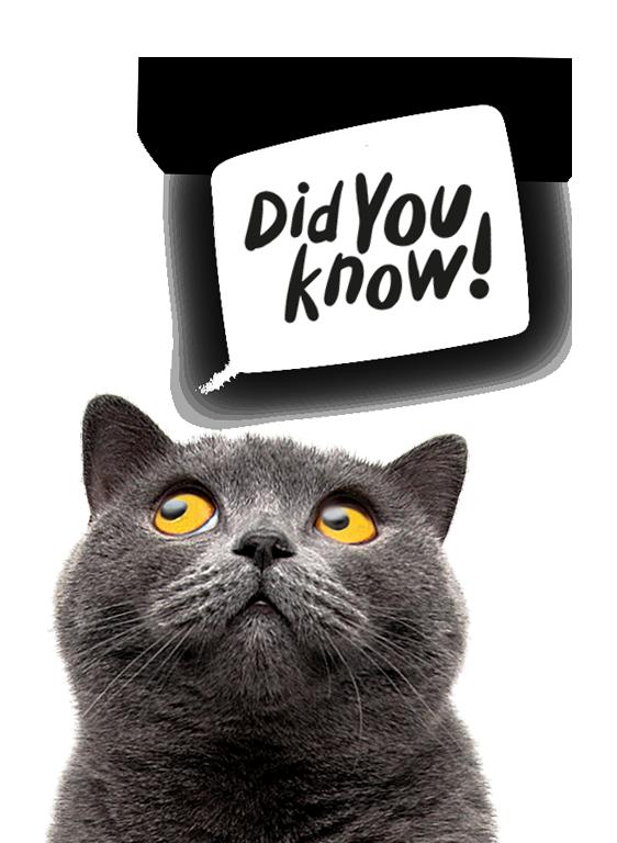 Cat Litter Mat by LitterLocker Did you know