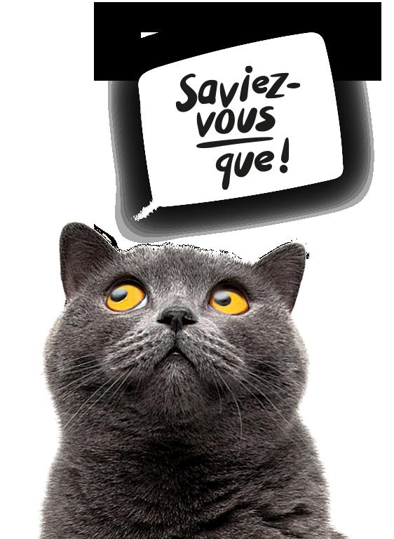 Tapis à litière pour chat LitterLocker Saviez-vous que