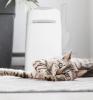 Poubelle à litière pour chat LitterLocker lifestyle